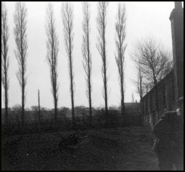 Pic of those famous poplars at Witton Park